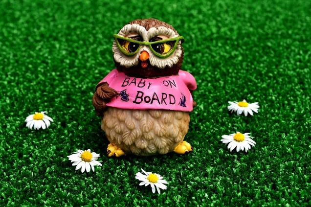 owl-2403125_1920